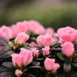 Bloeiende & groene planten